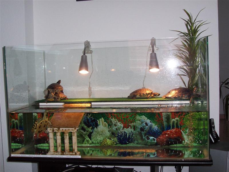 Amenagement d un vivarium pour tortues - Aquarium complet pour tortue d eau ...